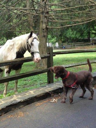 Hamanassett Bed & Breakfast: Arthur makes an equine friend