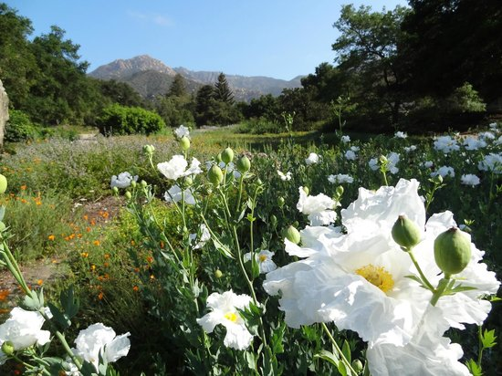 Santa Barbara Botanic Garden All You Need To Know Before You Go With Photos Tripadvisor