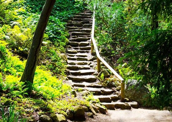 Steps to the Redwood Section - Picture of Santa Barbara Botanic ...