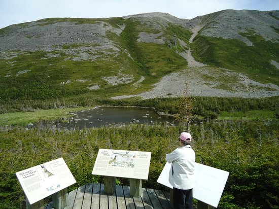 Gros Morne National Park: Information plaques at the trailhead- 2 hour hike to get here.