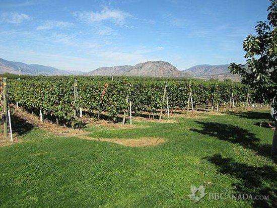Countryside Bed & Breakfast: Countryside Vineyard