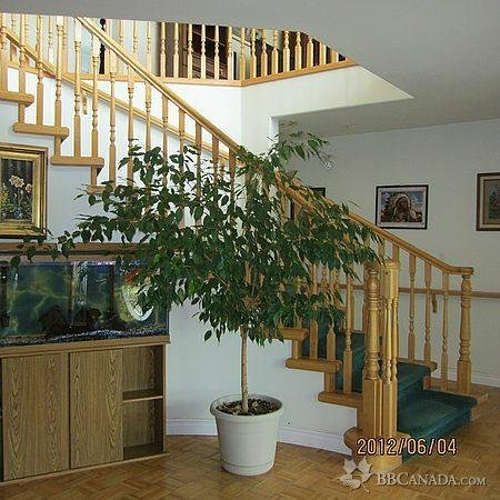 "Countryside Bed & Breakfast : Countryside B&B, ""The Inside View"""