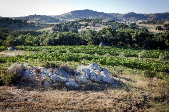 Milagro Winery: Milagro Farm Vineyards & Winery looking west