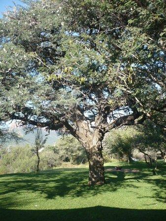 Marataba Safari Lodge: The garden