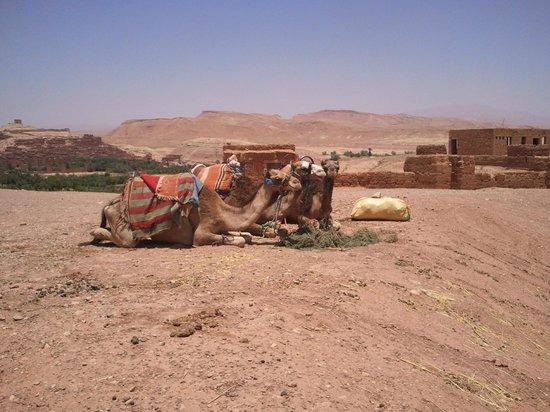 Jrana Tours Morocco: 5