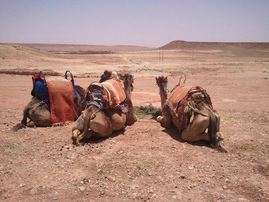 Jrana Tours Morocco: 9