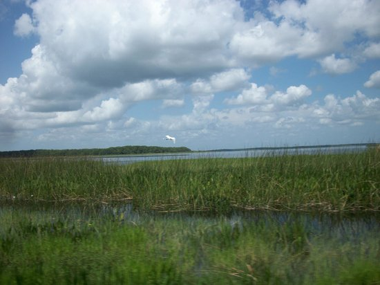 Alligator's Unlimited  Airboat Nature Tours: traveling through the marsh grass .....