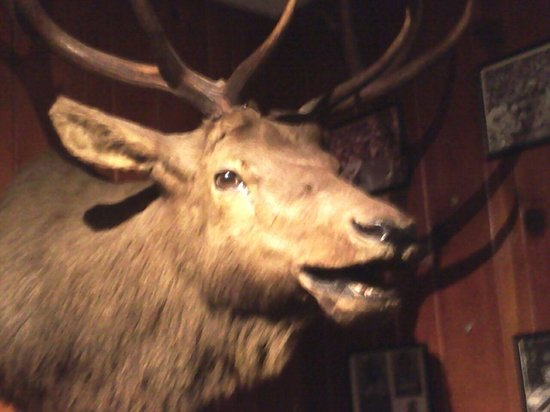 Ole's Big Game Steakhouse & Lounge: Another of Oly's trophy mounts.