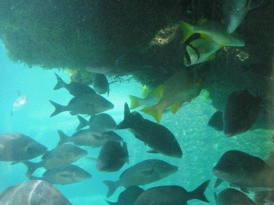 Marine Habitat at Atlantis: acuario
