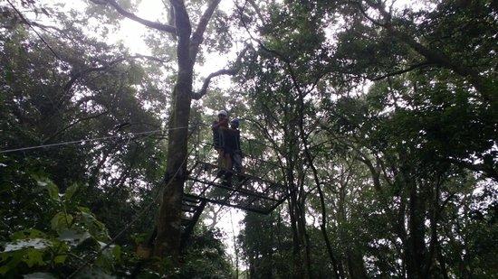 Monteverde Frog Pond: From the Tarzan swing