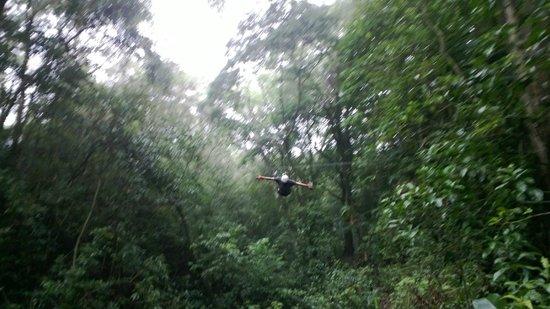 Monteverde Frog Pond: Looking upward on the Tarzan swing