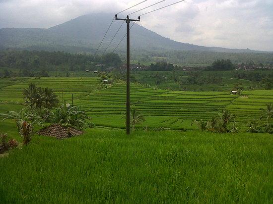Bali Trip Adventure