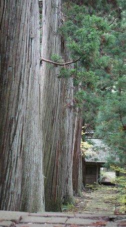 Tokoin Seisuiji Temple: 参道