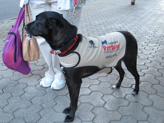 Hyatt Regency Buffalo: Care dog for veterans