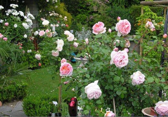 Im Röseligarten: Garten