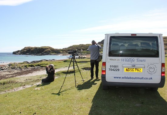 Wild About Mull Wildlife Tours