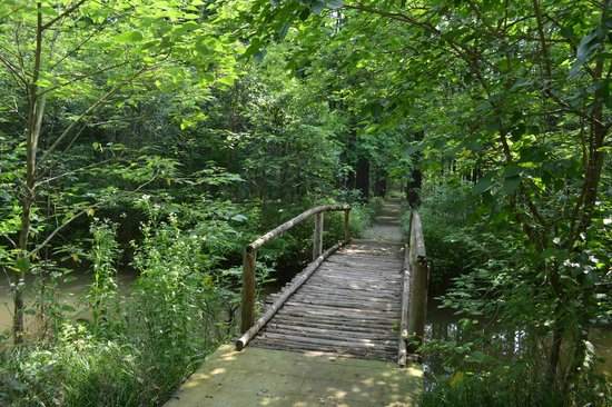 Baoying County, China: Bird Walk Trail
