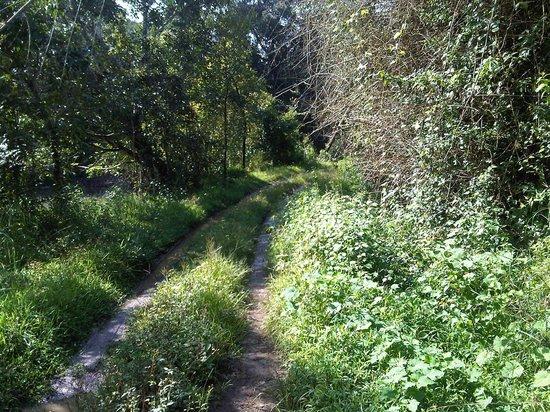 Nakoor Volkot: path