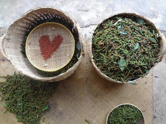 The Vine Retreat: sorting pepper love