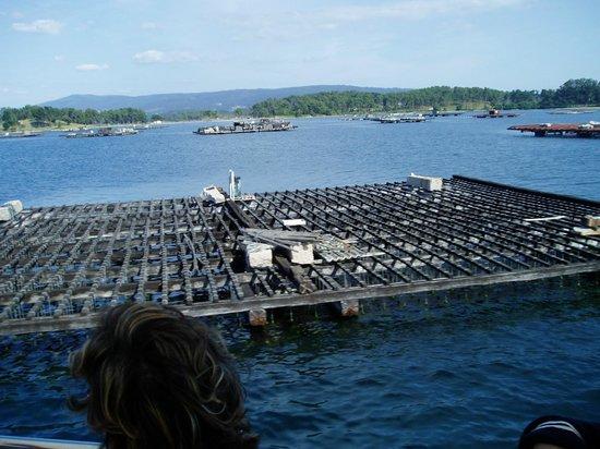 Galicia, Spania: платформа на которой выращивают мидий