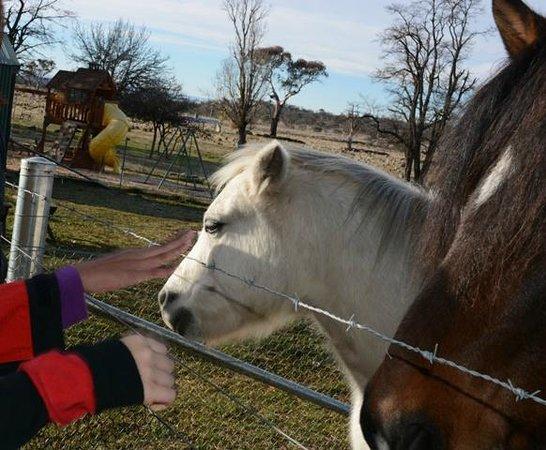 Highland Lodge Farmstay: Friendly horses!