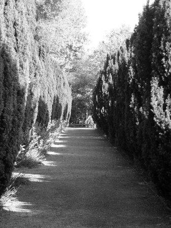 Hotel Endsleigh: Gardens