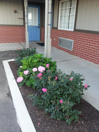 Berlin Village Inn: Flowers outside of our room.