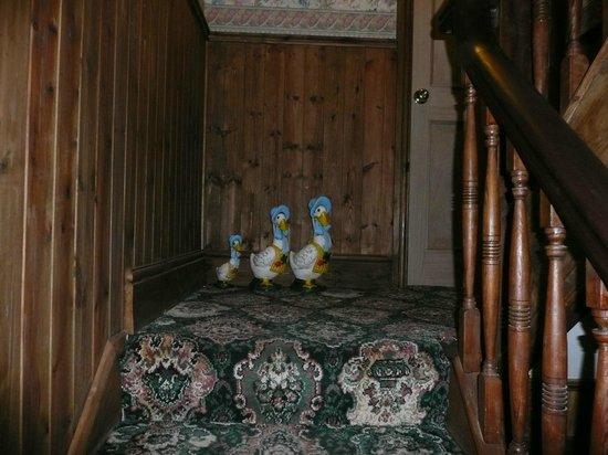 West Royd Bed and Breakfast: Our family of Ducks