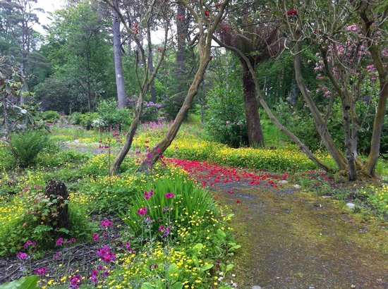Achamore Gardens: June day