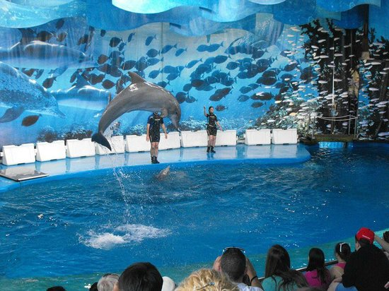 From The Dolphin Show This Is Worth Going To See Picture Of