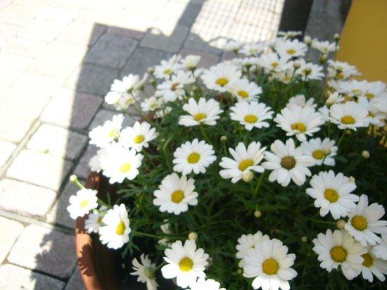 B&B Nonna Alda : I fiori del nostro giardino
