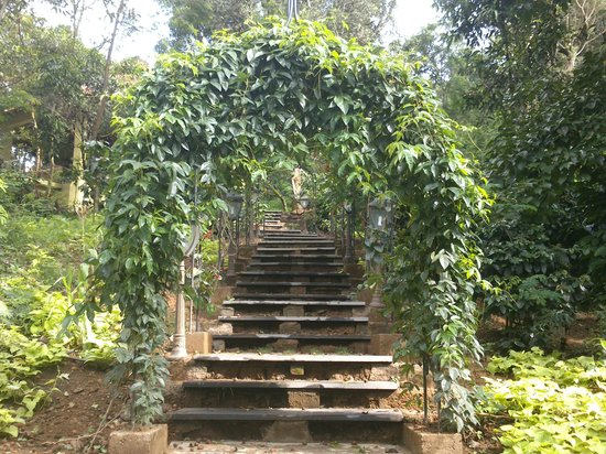 Old Kent Estates, Coorg: Steps that lead to breakfast area