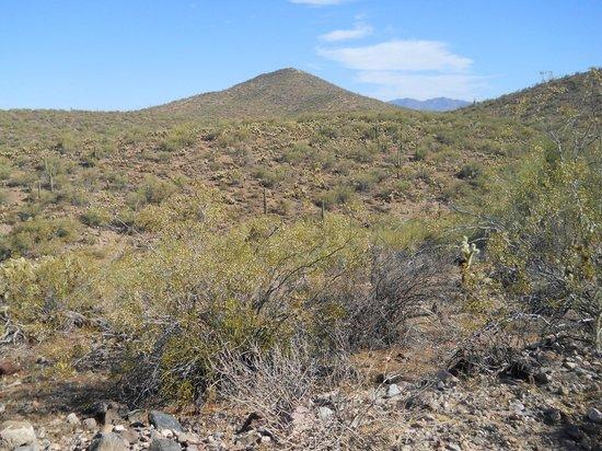 BC Jeep Tours : Desert outside Wickenburg, AZ