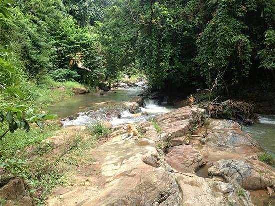 Kandy Samadhi Centre: Stream at base of property