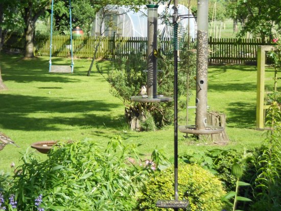 Tyn-Yr-Eithin Bed and Breakfast: The garden where all sorts of birds come to feed.