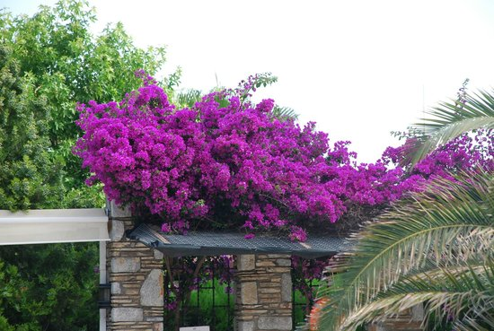 Aydos Club: Colourful and well maintained gardens