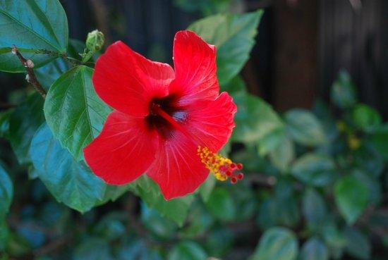 Aydos Club: Flower over breakfast area