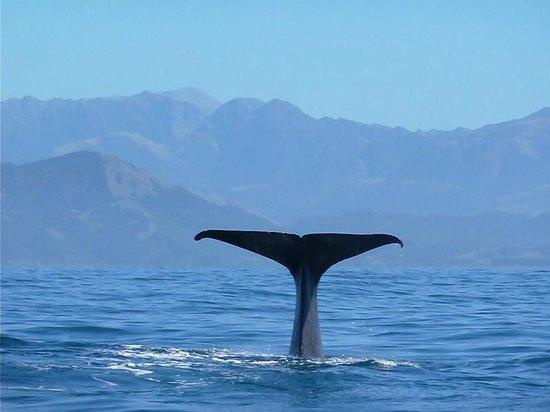 Kaikoura Apartments: Whale tales from Kaikoura