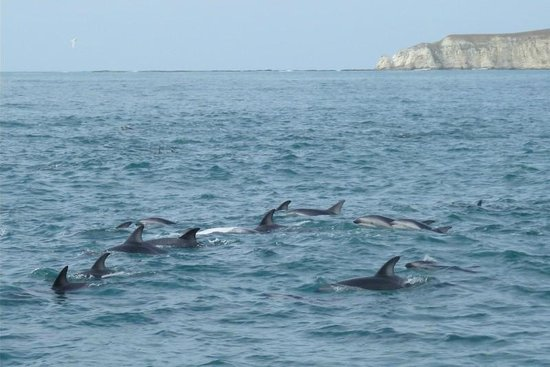 Kaikoura Apartments: Swimming with Dusky dolphins