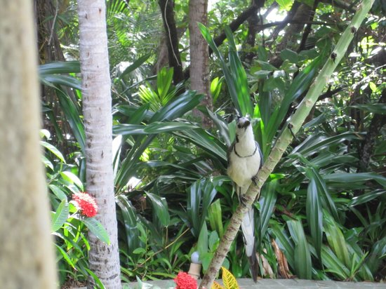 Ylang Ylang Beach Resort: Resort wildlife, but he'll try to steal the sugar packets!