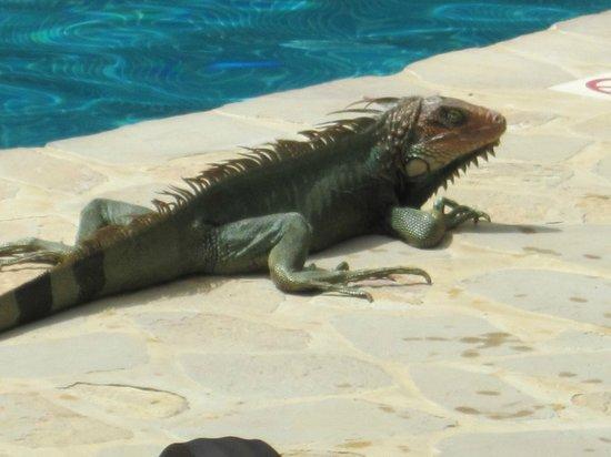 Ylang Ylang Beach Resort: Pool friends