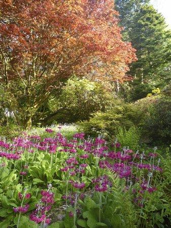 Ard Daraich: Gardens