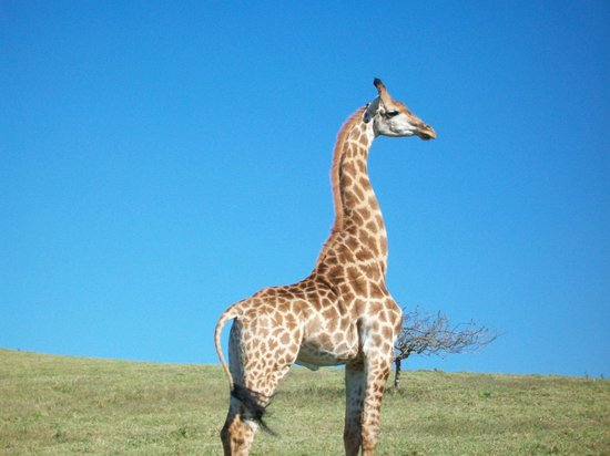 Durban, South Africa: Provided by: PHEZULU SAFARI PARK