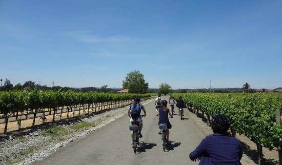 Ace It Bike Tours: The whole group heading to another winery