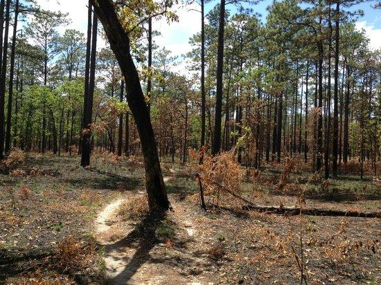 Tallahassee-St. Marks Historic Railroad State Trail: Munson Trail