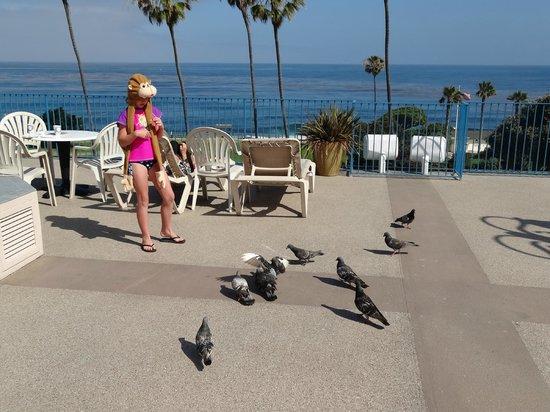 La Jolla Cove Hotel & Suites: Rooftop breakfast