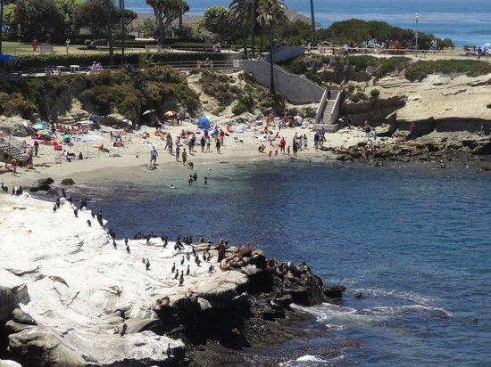 La Jolla Cove Hotel & Suites: La Jolla Cove