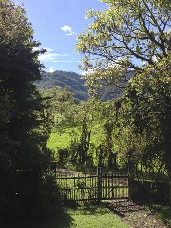 El Refugio de Intag Cloud Forest Lodge: The view from my room