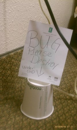 Embassy Suites by Hilton Nashville - Airport: Still under the cup after a Day of Housekeeping!