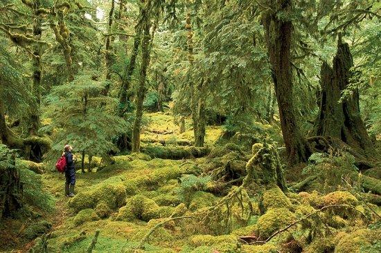Colombie-Britannique, Canada : Gwaii Haanas National Park Reserve. Haida Gwaii